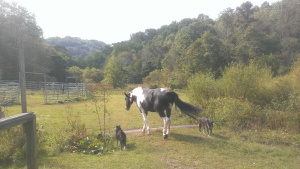 A peaceful moment on Barbara Volk's farm in Lewis County, W.Va.