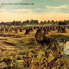 Hemp postcard