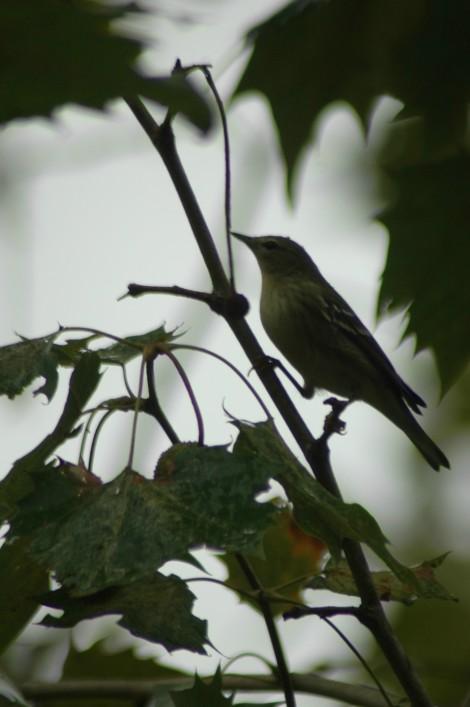 Bird 2 D Smith